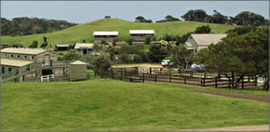 Ace Hi Riding Ranch - St Kilda Accommodation
