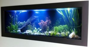 Aquariums in Cairns - St Kilda Accommodation
