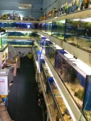 Clearwater Aquariums - St Kilda Accommodation