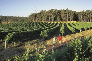 Margaret River Caves Wine and Cape Leeuwin Lighthouse Tour from Perth - St Kilda Accommodation