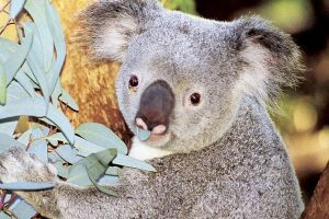 Perth Zoo General Entry Ticket and Sightseeing Cruise - St Kilda Accommodation