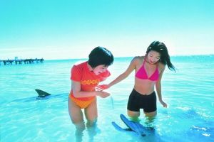 Monkey Mia Dolphins  Shark Bay Air Tour From Perth - St Kilda Accommodation
